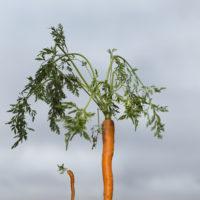 groeitraject-Drenthe